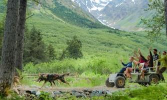 Dog sledding mountain view