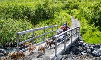 Dog sledding DSC 0283
