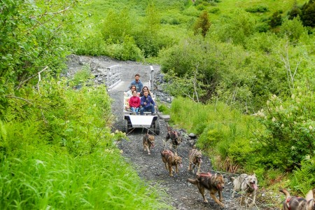 Girdwood Summer Sled Dog Adventure