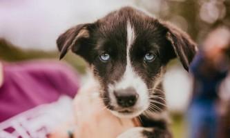 Summer Blue Eyed Puppy