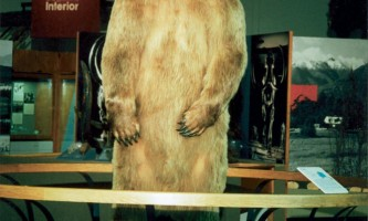 UAF Museum of the North uamn exhibit ottobear2019