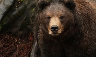 Fortress of the Bears Barbara Greninger IMG 1630 1
