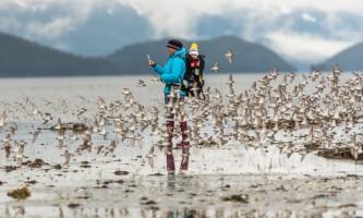 Album Kristin Carpenter 20180505 Banks Hartney Bay shorebirds