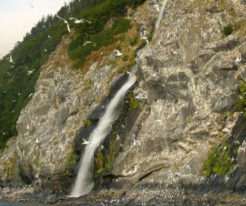Kittiwake Rookery Falls in Prince William Sound