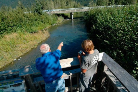Williwaw Creek offers exceptionally good conditions for watching coho, sockeye and chum salmon spawning in action.