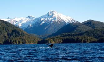 Sitka whalefest alaska AKS 2724 whale fest