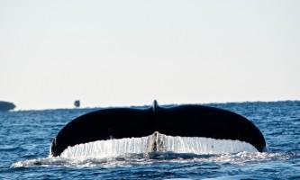 Sitka whalefest alaska fluke whale fest
