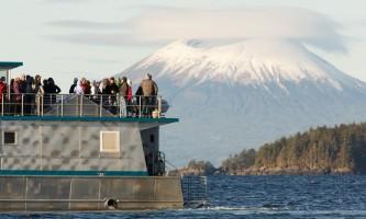 Sitka whalefest alaska S9 A7108 Tim C Shobe whale fest