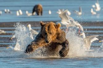 Alaska bear camp Alaska org Bearcamp Cathy Hart Photography great alaska bear camp