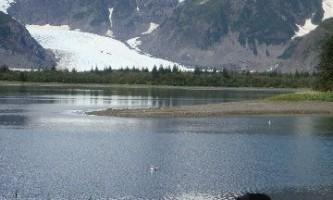 Kenai Fjords Glacier Lodge bear at KFGL2019