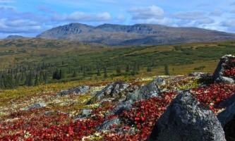 Caribou lodge Talkeetna mountains