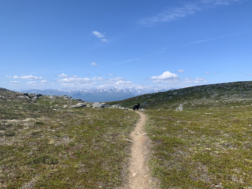Alaska Range Looms over the Kesugi Ridge Trail