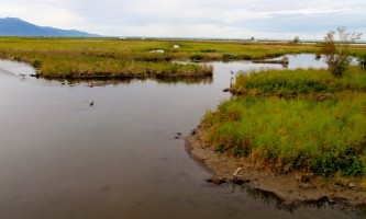 Alaska potters marsh Anch Coastal Wildlife Refuge11 Anchorage Coastal Wildlife Refuge