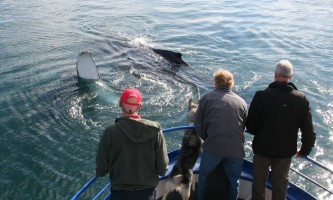 Alaska trip ideas whittier whalewaving 2014