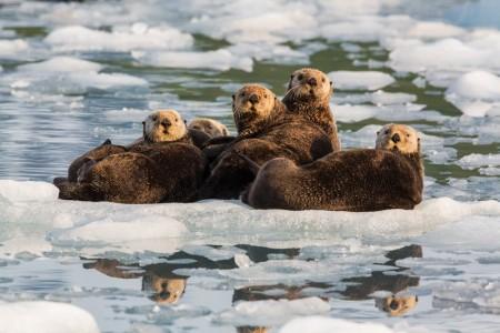 Alaska trip ideas whittier ak135d324952 Hugh Rose Photography 2014