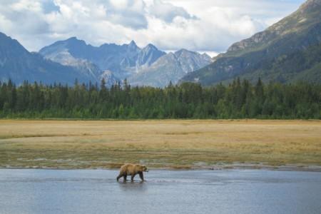 Alaska trip ideas mccarthy IMG 2611 Bear Camp