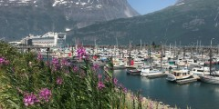 Whittier Harbor Cruise Ship anna dave disckason alaska whittier trip ideas