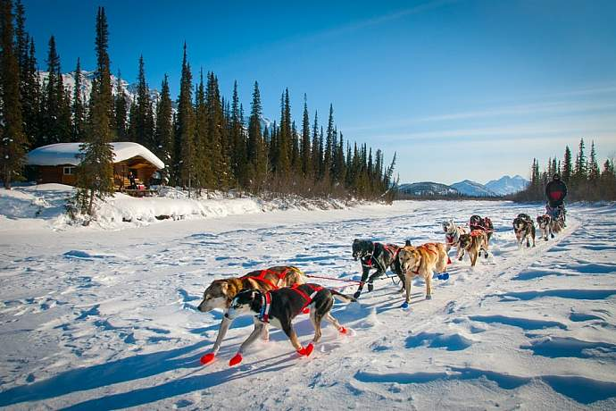 northern-lights-viewing-dogsledding-in-the-arctic-iniakuk-lake-lodge