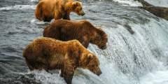 Best of alaska Bearson Brooks Falls