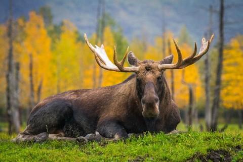 Stop into the Alaska Wildlife Conservation Center