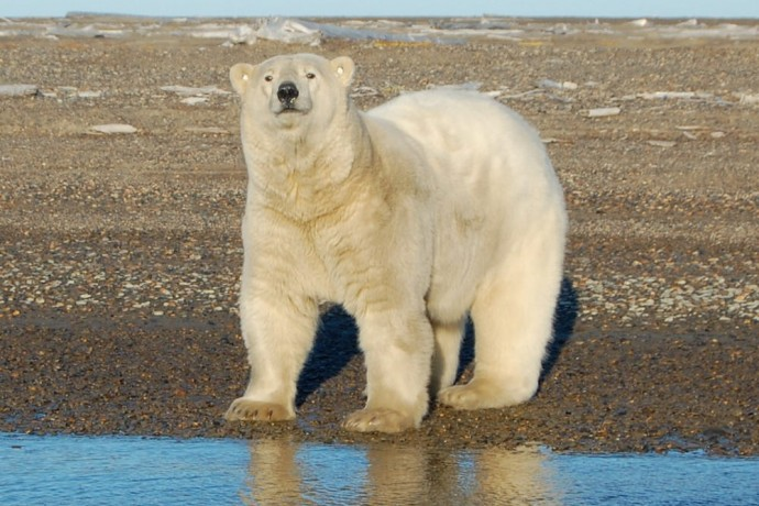 letting-deals-or-coupon-books-run-your-trip-Polar-Bear-Expedition
