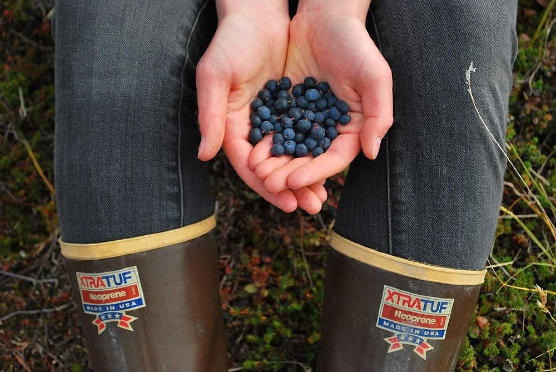 Discover delicious berries across Alaska.