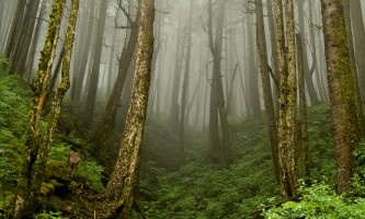 Rainforest 2015 Foggy Mountain 2 Boreal Forest thumbnail