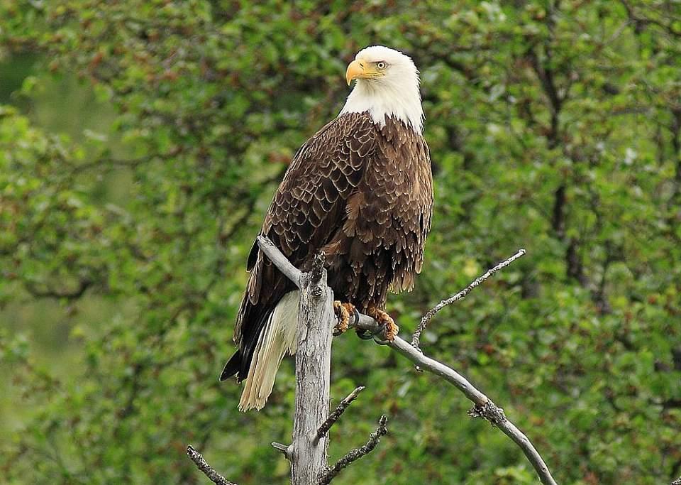 Eagle river nature center app with logos bald eagle1