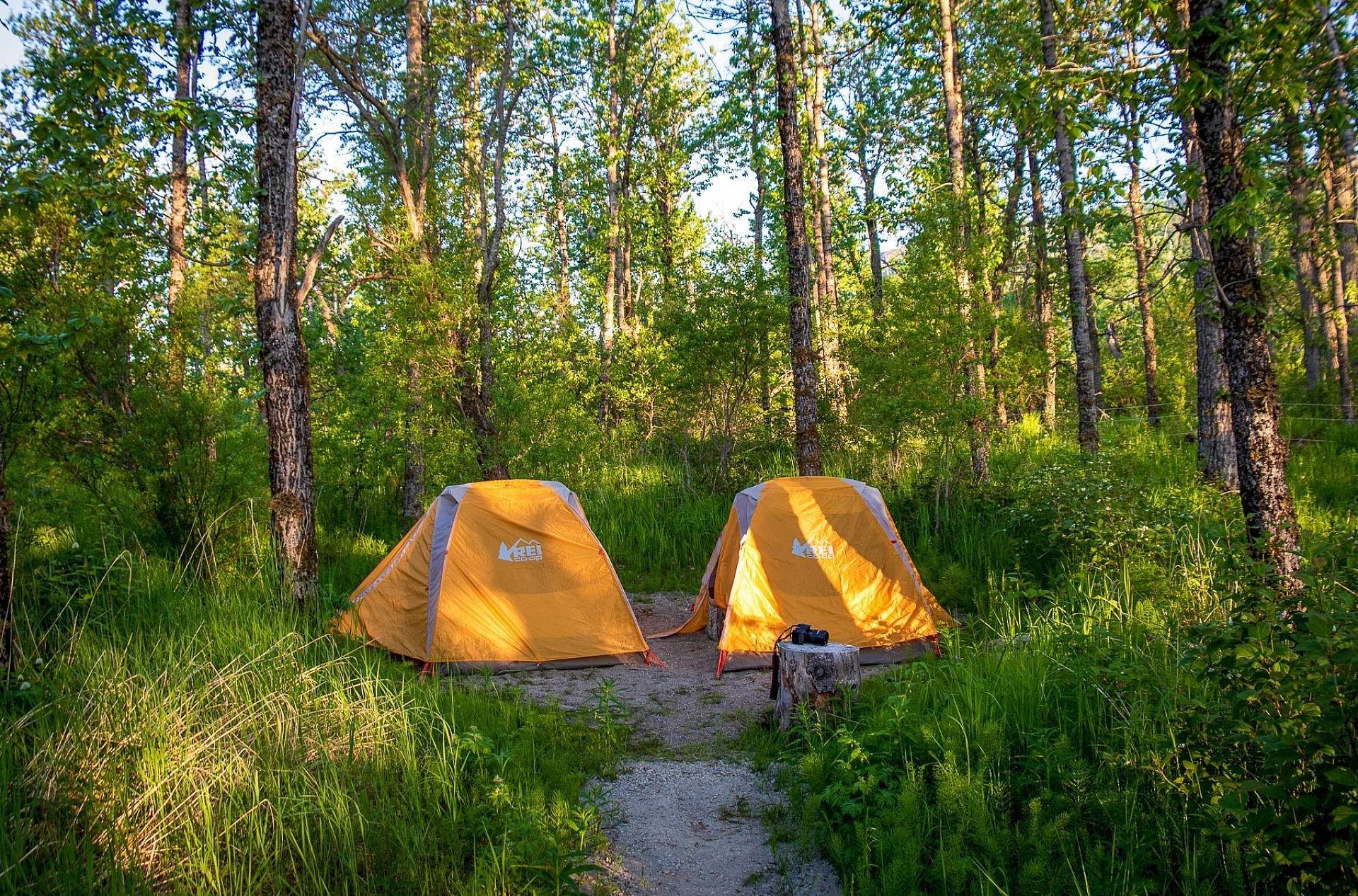 Campground at Brooks Camp in Katmai National Park