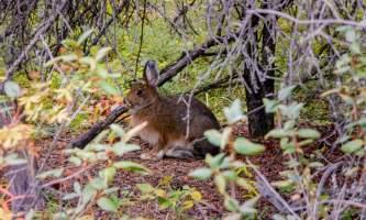 National Parks Photos Alexyn Scheller Denali National Park 0 K8 A7942
