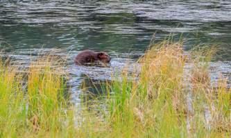 National Parks Photos Alexyn Scheller Denali National Park 0 K8 A7977