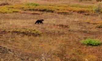 National Parks Photos Alexyn Scheller Denali National Park 0 K8 A8033