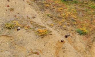 National Parks Photos Alexyn Scheller Denali National Park 0 K8 A8130