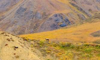 National Parks Photos Alexyn Scheller Denali National Park 0 K8 A8139