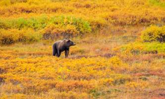 National Parks Photos Alexyn Scheller Denali National Park IMG 3363