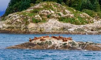 National Parks Photos Alexyn Scheller Glacier Bay National Park 0 K8 A5497