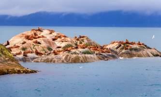 National Parks Photos Alexyn Scheller Glacier Bay National Park 0 K8 A5512