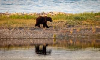 National Parks Photos Alexyn Scheller Katmai National Park 0 K8 A0756