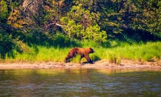 National Parks Photos Alexyn Scheller Katmai National Park Katmai 29