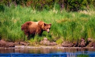 National Parks Photos Alexyn Scheller Katmai National Park Katmai 49