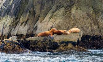 National Parks Photos Alexyn Scheller Kenai Fjords National Park 0 K8 A8548