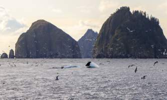 National Parks Photos Alexyn Scheller Kenai Fjords National Park 0 K8 A8595