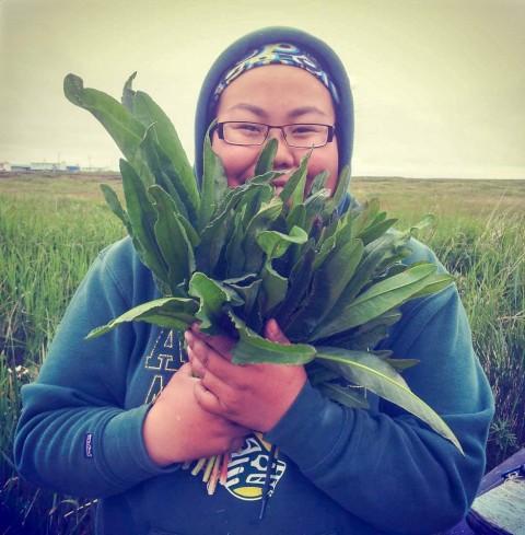Harvesting Sourdock for Subsistence in Ninivak, Alaska