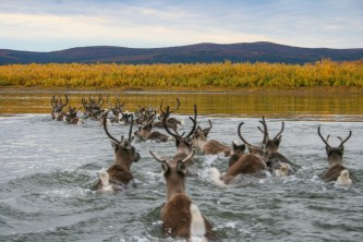 Humans caribou kobuk river jaci crace murray
