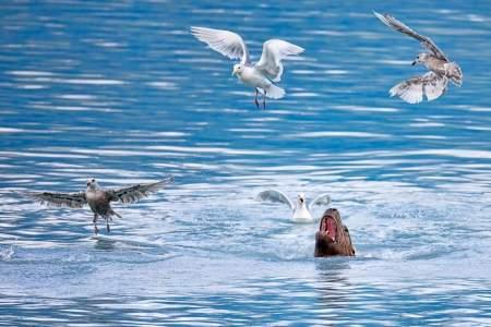 Humans sea lion valdez jeff cobble