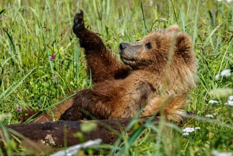 Jeff Schultz Bear Viewing Lake Clark 180716 1 X5676