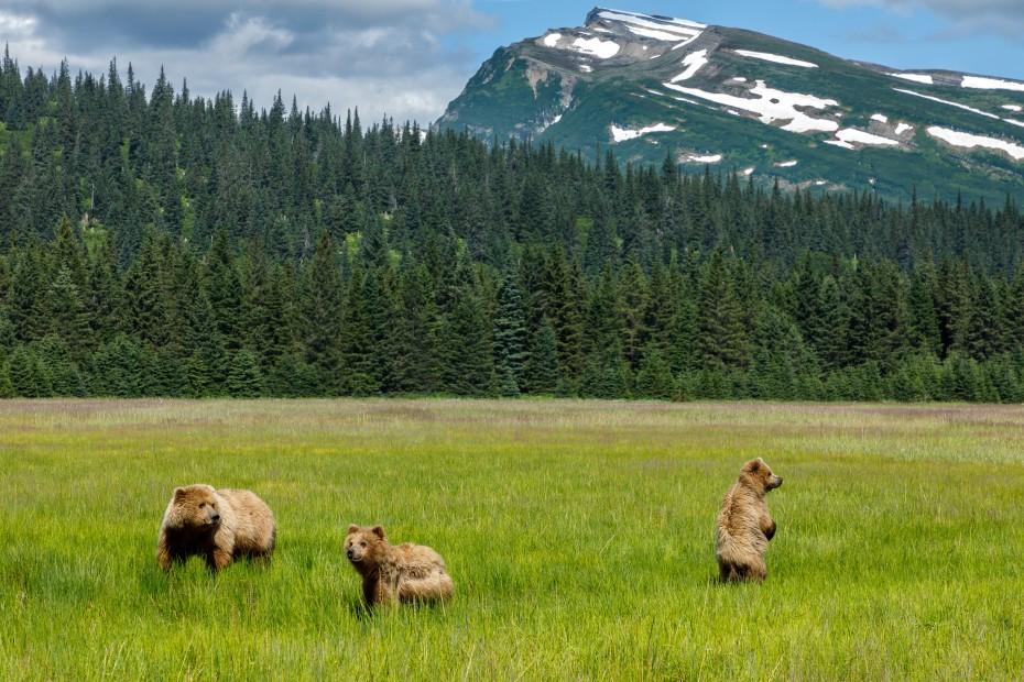 Jeff Schultz Bear Viewing Lake Clark 180716 5 F5825