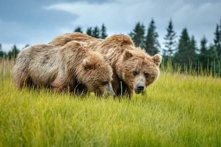 Jeff Schultz Bear Viewing Lake Clark National Park180806 1 X8905