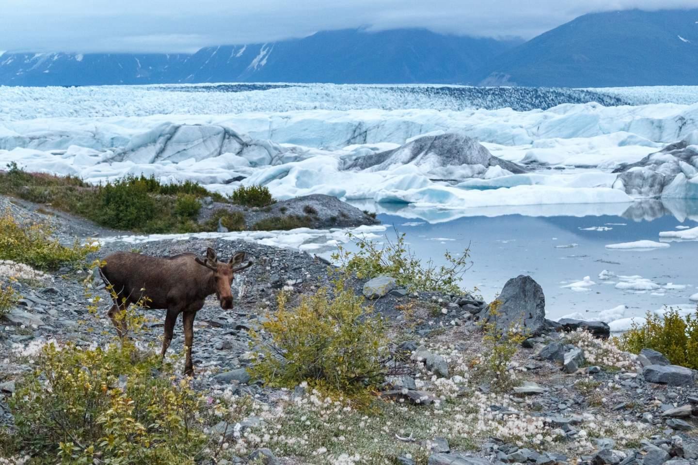 Jeff Schultz Knik Glacier 160715 5 M6470