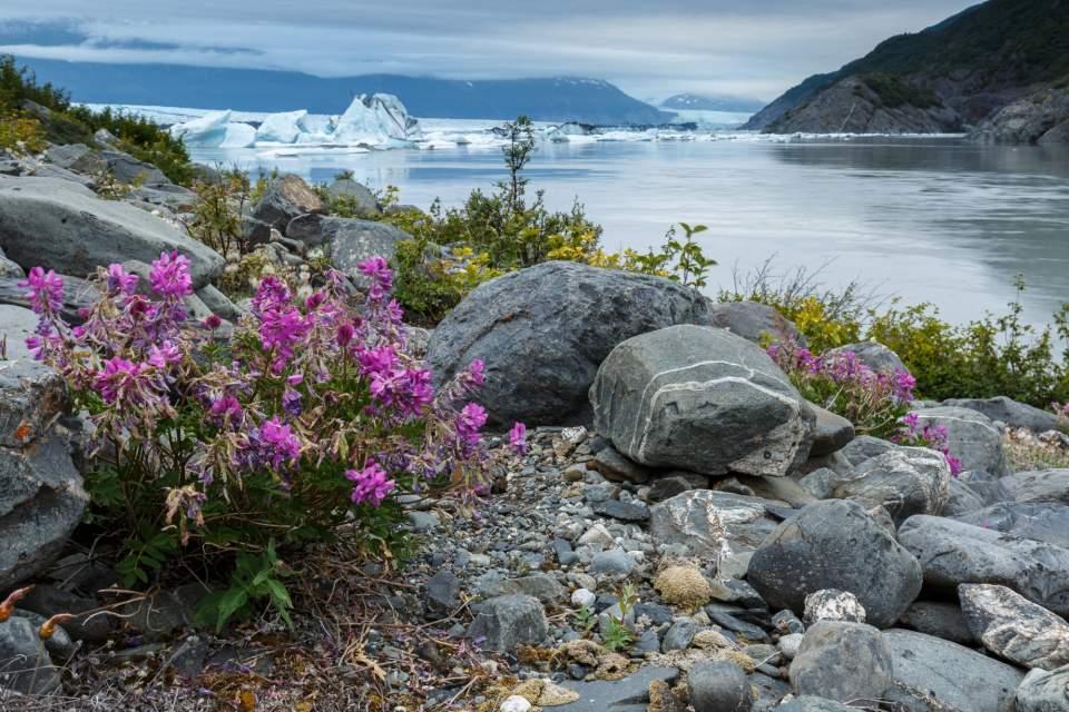 Jeff Schultz Knik Glacier 160716 5 M6531
